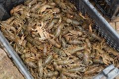 Cangrejos en el mercado de pescados Fotos de archivo