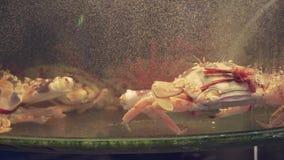 Cangrejos en el tanque del acuario del restaurante para la venta al vídeo común de la cantidad de los comensales almacen de video