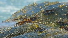 Cangrejos en la roca en la playa