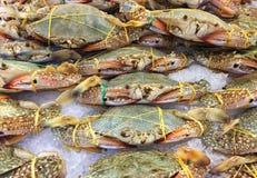 Cangrejos frescos en el hielo Foto de archivo libre de regalías