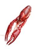 Cangrejos hervidos rojo Fotos de archivo libres de regalías