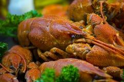 Cangrejos hervidos rojos y apetitosos Foto de archivo libre de regalías