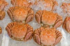 Cangrejos melenudos japoneses Fotos de archivo