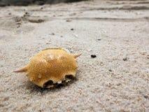 Cangrejos muertos secos en la playa del huahin Imagen de archivo libre de regalías