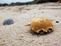 Cangrejos muertos secos en la playa del huahin Fotografía de archivo libre de regalías