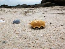 Cangrejos muertos secos en la playa del huahin Imagenes de archivo