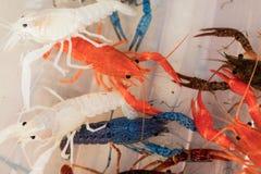Cangrejos rojos australianos de la garra Imágenes de archivo libres de regalías