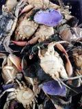 cangrejos suaves Imagenes de archivo