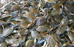 Cangrejos vivos Fotos de archivo