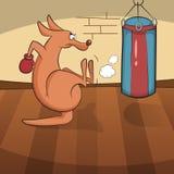 Canguro sveglio impegnato negli sport attivi Fotografie Stock