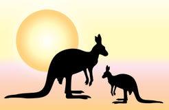 Canguros australianos Imagenes de archivo