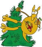 Canguru louco Foto de Stock Royalty Free