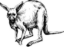 Canguru tirado mão Imagem de Stock Royalty Free