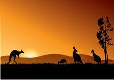Cangurus de Austrália Fotos de Stock