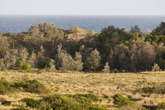 Cangurus no por do sol Parque nacional de Eurobodalla austrália Fotografia de Stock Royalty Free