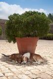 Cani fotografie stock libere da diritti