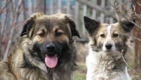 Cani fotografia stock