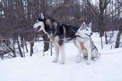Cani immagini stock
