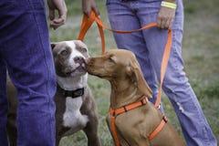 Cani amichevoli Fotografie Stock