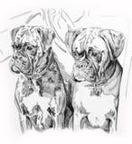 Cani in automobile Fotografie Stock Libere da Diritti