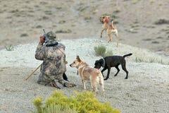 Cani cammuffati di inseguimento e del cacciatore in deserto Fotografia Stock