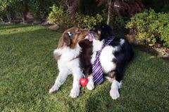Cani che baciano l'erba verde rossa di giorno di biglietti di S. Valentino del giardino del cuore Fotografia Stock Libera da Diritti
