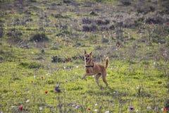 Cani che corrono liberamente in natura fotografie stock