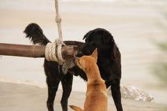 Cani che dividono oscillazione di legno sulla spiaggia immagine stock
