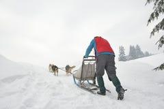 Cani che partecipano al concorso di corsa della slitta tirata da cani Immagini Stock Libere da Diritti