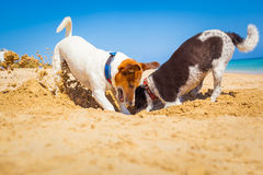 Cani che scavano un foro Immagini Stock Libere da Diritti
