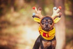 Cani in costume dei cervi, umore di autunno, cervo fantastico immagini stock