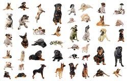 Cani da guardia Fotografia Stock Libera da Diritti