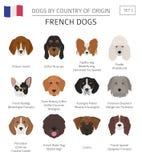 Cani da pæse d'origine Razze francesi del cane Templa di Infographic Royalty Illustrazione gratis
