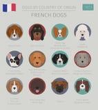 Cani da pæse d'origine Razze francesi del cane Templa di Infographic Illustrazione di Stock