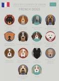 Cani da pæse d'origine Razze francesi del cane Templa di Infographic Illustrazione Vettoriale