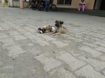 Cani del bambino Fotografia Stock Libera da Diritti