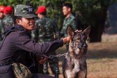 Cani di addestramento della guerra Fotografie Stock