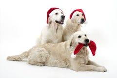 Cani di Christmass Fotografie Stock Libere da Diritti