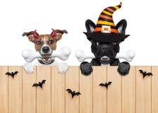 Cani di diavolo di Halloween affamati per alimento Immagini Stock Libere da Diritti