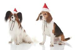 Cani di natale Fotografie Stock Libere da Diritti