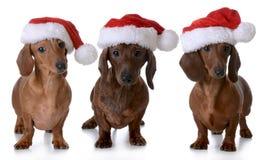 Cani di Natale Fotografia Stock
