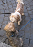 Cani di riunione Fotografia Stock Libera da Diritti