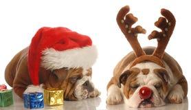 Cani di Rudolph e della Santa Fotografia Stock Libera da Diritti