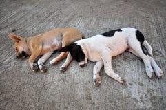 Cani di sonno Fotografia Stock Libera da Diritti