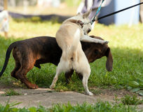 Cani di varie razze Fotografia Stock