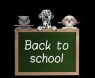 Cani ed allievi del gatto di nuovo alla scuola Immagine Stock Libera da Diritti