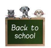 Cani ed allievi del gatto di nuovo alla scuola Immagini Stock Libere da Diritti
