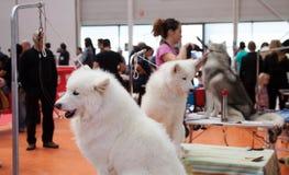 Cani ed i loro proprietari alla mostra Fotografia Stock Libera da Diritti