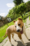 Cani felici adorabili immagine stock