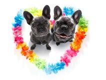 Cani felici dei biglietti di S. Valentino fotografia stock